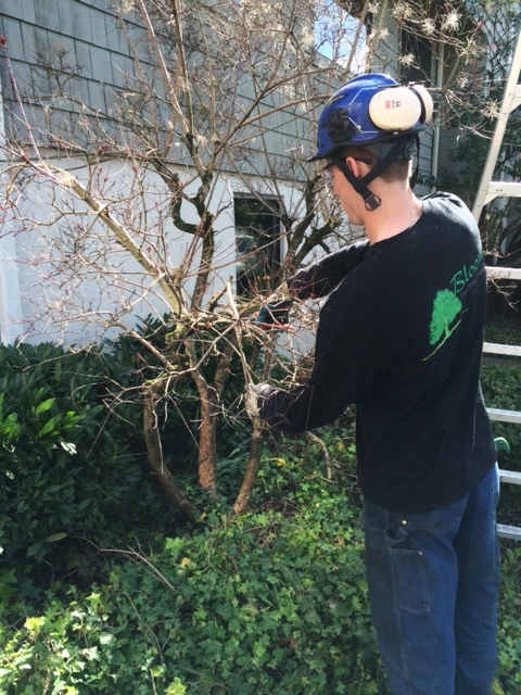 bush and shrub pruning for website